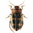 Integrative taxonomic review of the genus ...